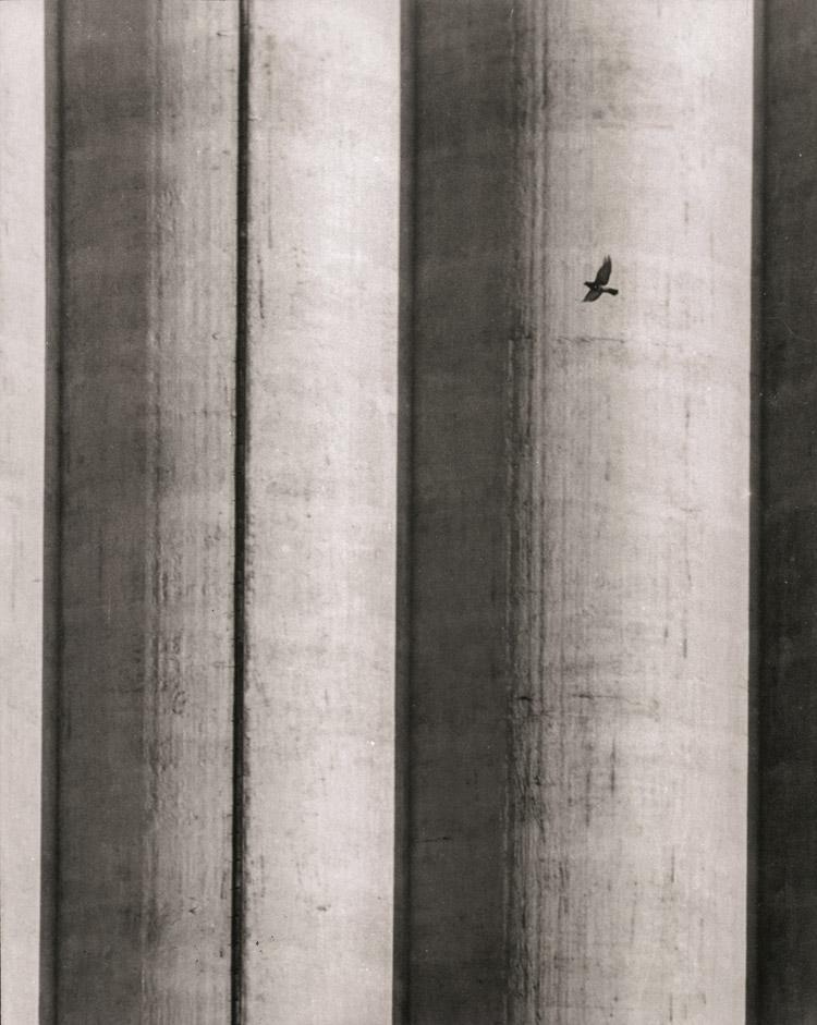 Julio Maubecin. Ave en vuelo, 1959.